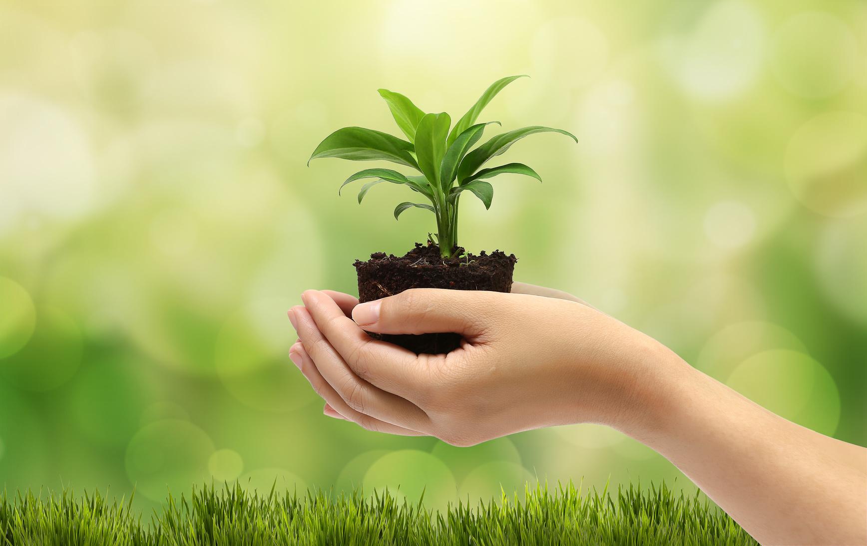 Becsa Y Su Compromiso Con El Medio Ambiente